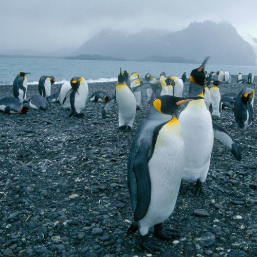 8444-penguins-in-antartica