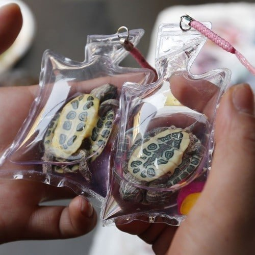A woman checks turtles in small plastic bags before buying them from a vendor at a shopping district in Beijing