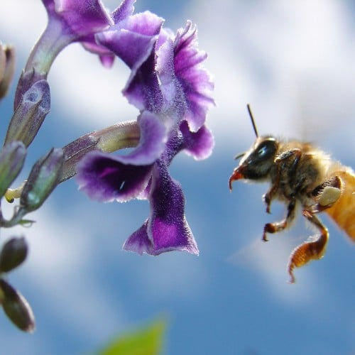 flowers-and-bee