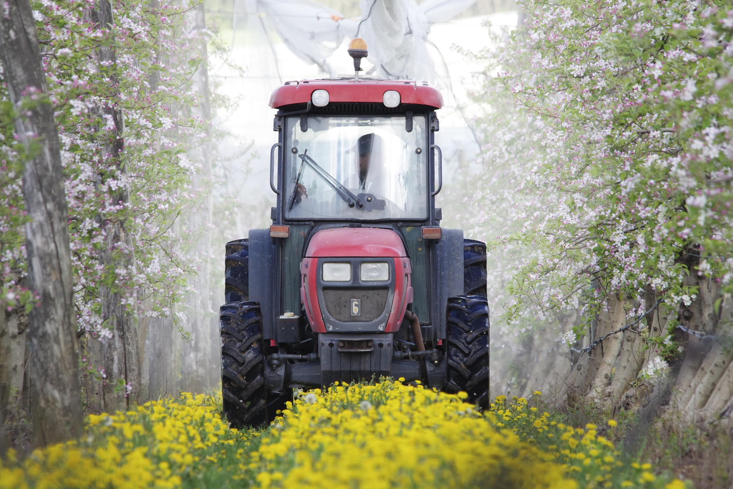 Tractor Spraying Pesticides on Apple Plantation in France